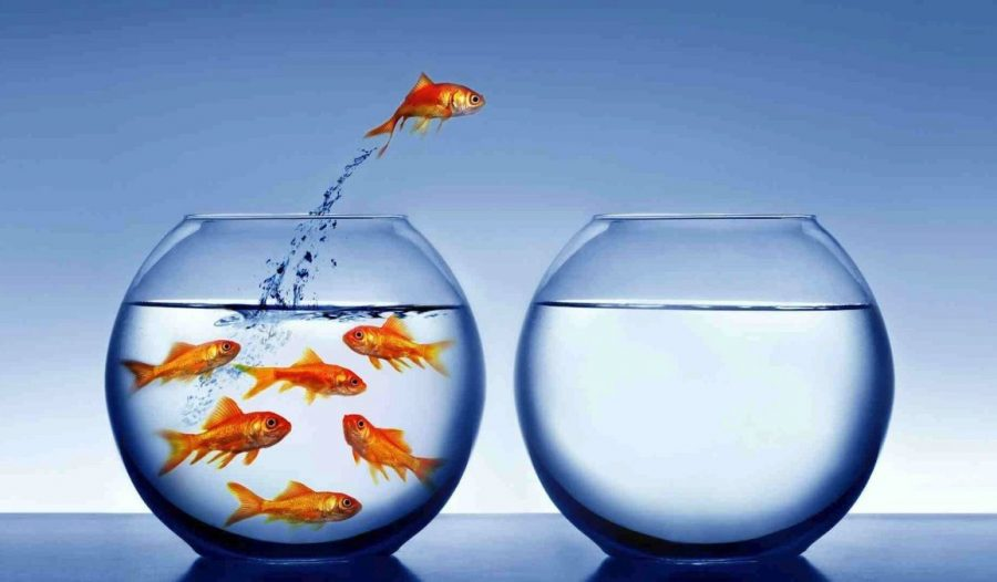fish jumping into an empty fish bowl